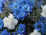 Close-up of Colorful Blue and White Flowers with Baby&#39;s Breath