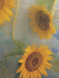Sunflowers Behind Wet Glass with Water Droplets