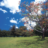 Flowering Trees with Blue Sky and White Clouds