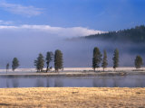 Alum Creek in the Hayden Valley  Yellowstone National Park  Wyoming  USA