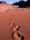 Tracks Across the Dunes of Wadi Rum  Wadi Rum National Reserve  Aqaba  Jordan