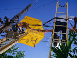 Men Repairing Telephone Lines  Havana  Cuba