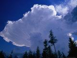 Storm Clouds (Cumulonimbus Cluds) Over Treeline  Chamonix  Rhone-Alpes  France