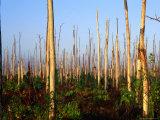 Hurricane Damage to Forest  Everglades National Park  USA
