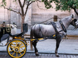 Horse and Carriage  Sevilla  Spain