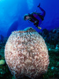 Diving to Inspect a Giant Sponge  Bloody Bay Wall  West End Point  Cayman Islands