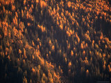 Aerial View of Forest at Dusk  New York  USA