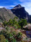 Flora with Mount Anne Behind  South West National Park  Tasmania  Australia