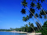 Bending Palm Trees on Unawatuna Beach  Unawatuna  Southern  Sri Lanka