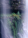 Cascading Waters of Russell Falls  Mt Field National Park  Tasmania  Australia