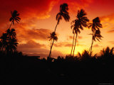 Palm Trees at Sunset  Fiji