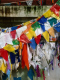 Buddhist Prayer Flags Around the Bo Tree  Anuradhapura  North Central  Sri Lanka