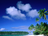 Palm Trees on Aitutaki Lagoon  Aitutaki  Southern Group  Cook Islands