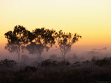 Trees at Sunrise  Cape York Peninsula  Australia
