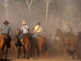 A Group of Stockmen Mustering Cattle on New Dixie Station  Queensland  Australia