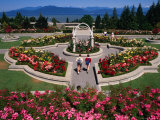 Couple Walking Through University of British Columbia Rose Garden  Vancouver  Canada
