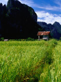 Stilted House Surrounded by Limestone Cliffs and Fields  Vang Vieng  Laos