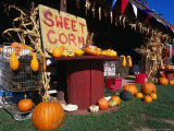 Roadside Stall Selling Sweet Corn and Pumpkin  Forestburg  USA