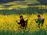 Female Farmers Walking Through Canola Fields  Kaili  China