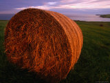 Hay Bale in Field at Sunset  South Ronaldsay  Orkney Islands  Scotland