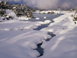 Snow on Franklin River  Cradle Mountains  Lake St Clair National Park  Tasmania  Australia