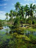 Village and Lagoon  Marang  Terengganu  Malaysia