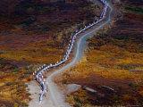 Pipeline in Countryside  Alaska  USA