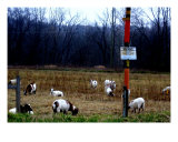 James Edwards Photography Art Goats Landscapes