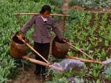 Woman Irrigating Crops  Guilin  China