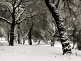 Queens Park Manchester in the Winter