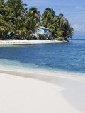 Belize  Ranguana Caye  Palm Trees and Beach