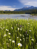 Kootenay National Park  British Columbia  Canada