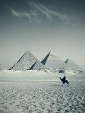 Camel and Giza Pyramids  Giza  Cairo  Egypt