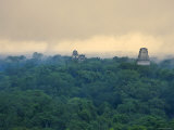 Tikal Pyramid Ruins and Rainforest  Dawn  Guatemala