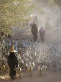 Goat Herder  Al Wadi Dawan  Nr Wadi Hadhramawt  Yemen