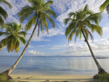 Panama  Bocas Del Toro Province  Carenero Island  Palm Trees and Beach