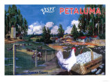 Petaluma  California - World's Egg Basket Poster