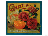 Camellia Orange Label - Redlands  CA