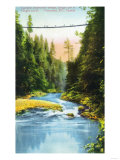 Vancouver  Canada - View of Capilano Suspension Bridge No 2