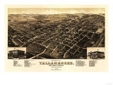 Tallahassee  Florida - Panoramic Map