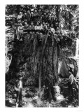 Lumberjacks prepairing Fir Tree for St Louis World's Fair Photograph - Washington State