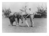 Elephant Caddie on Golf Course Photograph - Miami  FL