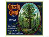 Grizzly Giant Orange Label - San Dimas  CA