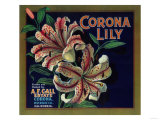 Corona Lily Orange Label - Corona  CA