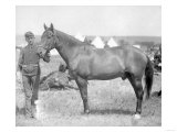 "Horse ""Comanche"" the sole Survivor of the Custer Massacre Photograph - South Dakota"