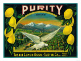 Purity Lemon Label - Tustin  CA