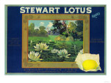 Stewart Lotus Lemon Label - Upland  CA