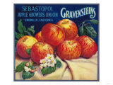 Sebastopol Gravensteins Apple Label - Sonoma  CA