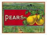 Pear Stock Crate Label