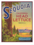 Sequoia Vegetable Label - Watsonville  CA